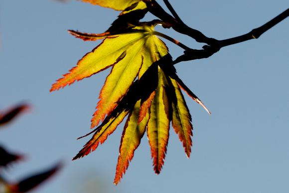 Autumn leaves_71A4497