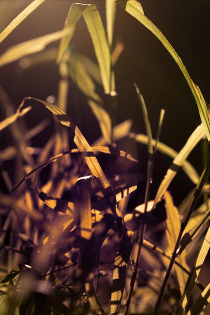 Grass_71A4549